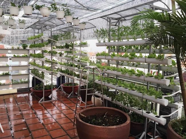 Bí kíp trồng rau