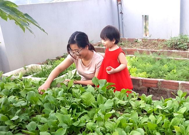 Chị Hứa Tố Uyên (Tuyên Quang) đang thu hoạch rau củ