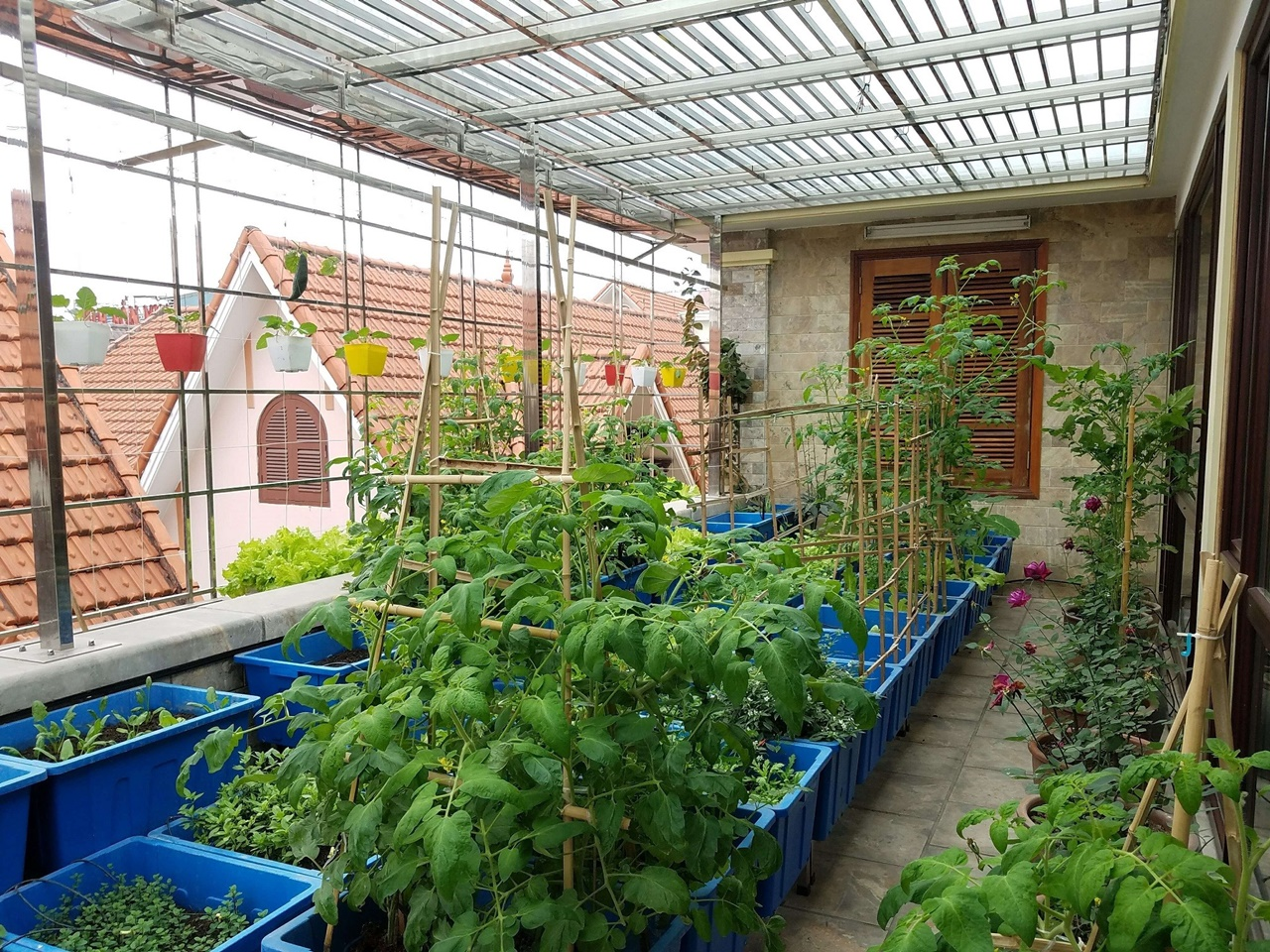 Vườn rau trên sân thượng