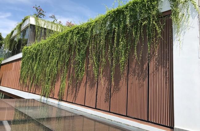 Tưới nước thường xuyên để cây phát triển tốt