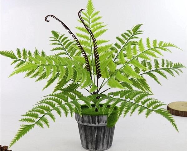 Loài cây này còn rất tốt cho môi trường sống