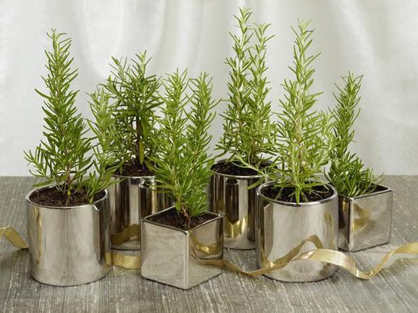 Đảm bảo cây được bón phân, tưới nước đầy đủ