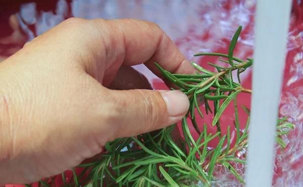 Rửa sạch lá Hương thảo