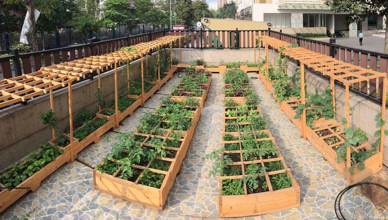 Cần đảm bảo ánh sáng phù hợp khi trồng rau