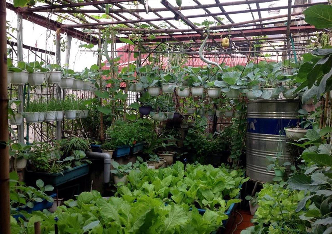 Vườn rau trên sân thượng có mái