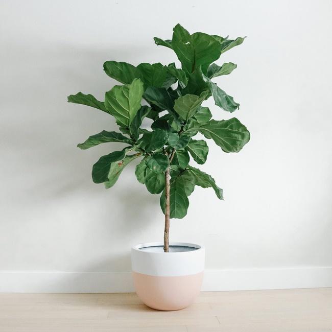 Đặt cây ở nơi nhiều ánh sáng, duy trì độ ẩm cho đất