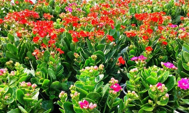 Dàn hoa sống đời