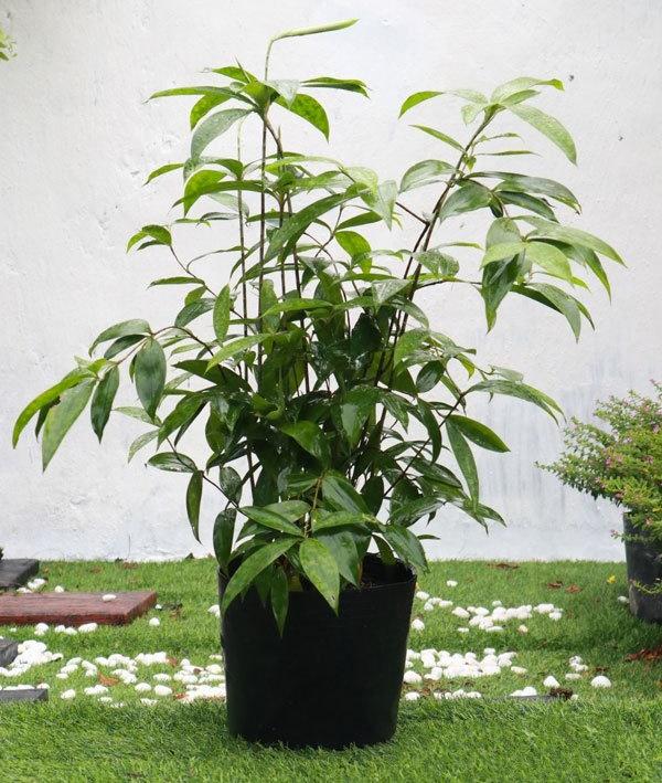 Tránh đặt cây ở nơi nắng gắt