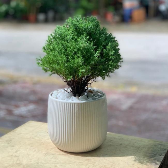 Bạn có thể trồng cây bằng phương pháp giâm cành