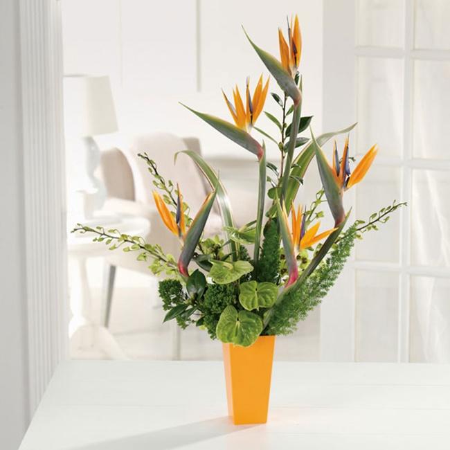 Các chậu hoa Thiên điểu được trưng bày ở nhiều khu vực đa dạng