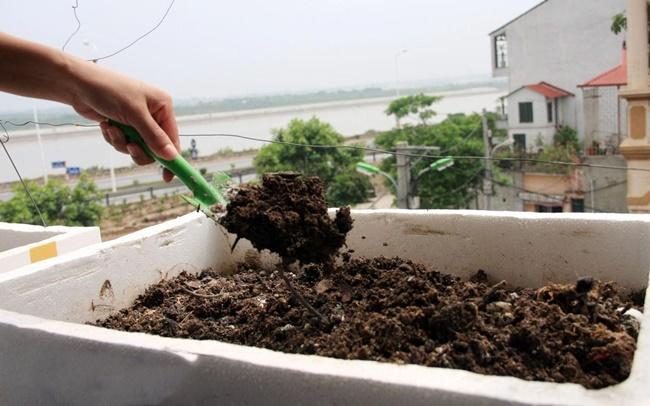 Chọn đất sạch để trồng rau