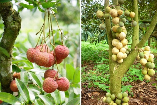 Vườn cây ăn quả bốn mùa