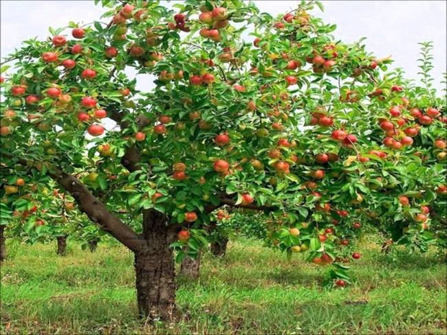 Vườn cây ăn quả