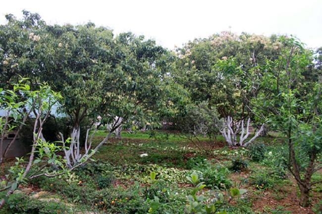 Vườn cây tạp