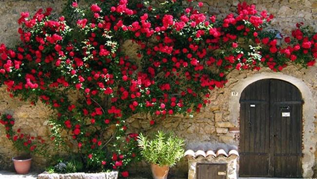 Khu vườn kiểu châu Âu cổ điển 1