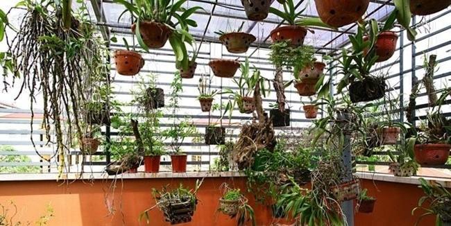 Phong cách vườn Babylon