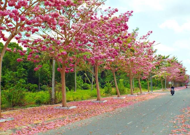 Hoa được trồng nhiều ở những nơi công cộng