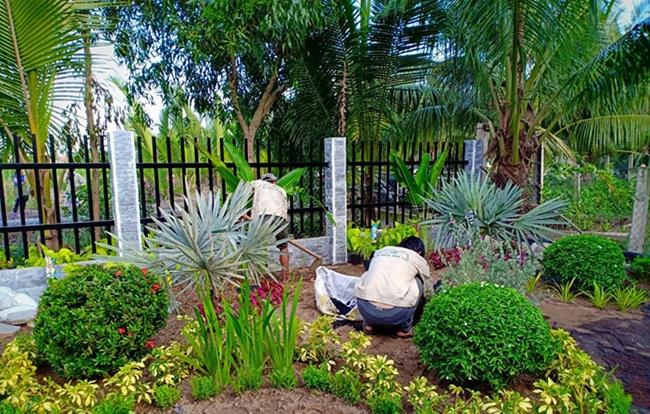Cây được trồng cảnh tại nhiều địa điểm công cộng