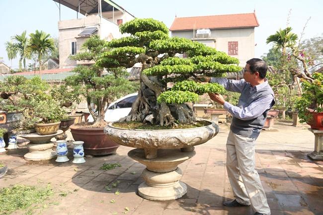 Đảm bảo ánh sáng và lượng nước tưới cho cây