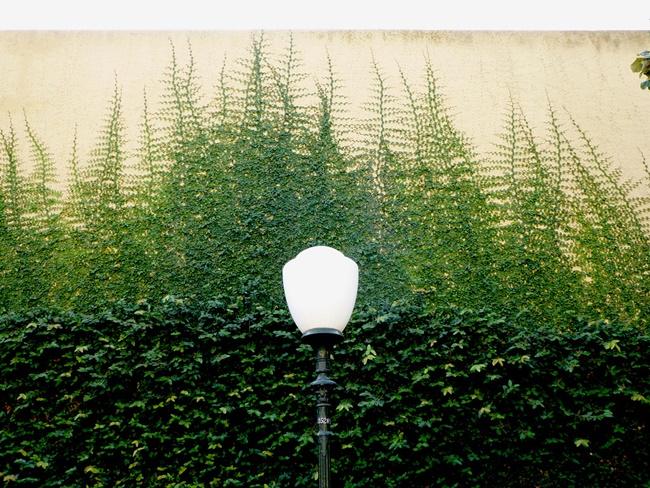 Đảm bảo đủ không gian và ánh sáng cho cây phát triển