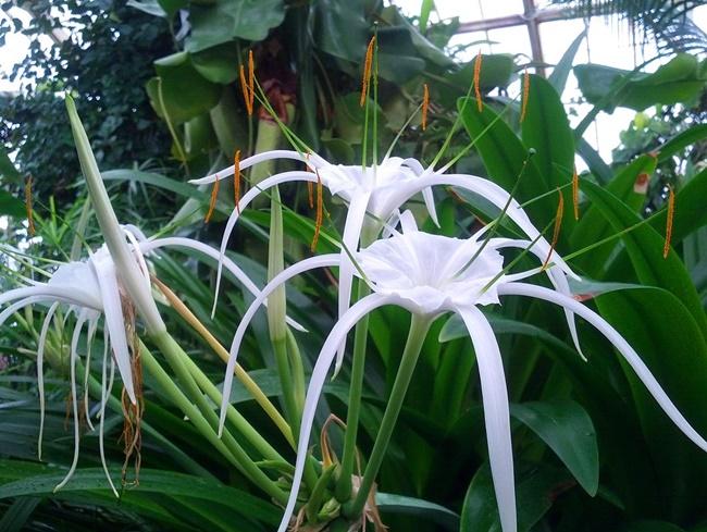 Cây có hoa màu trắng mềm mại, đẹp mắt