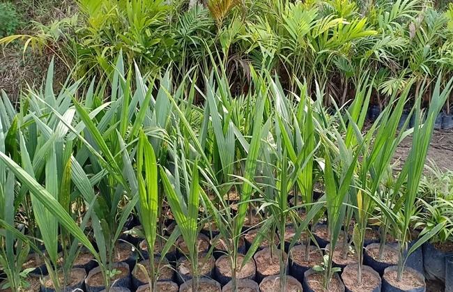 Trồng cây bằng phương pháp gieo hạt