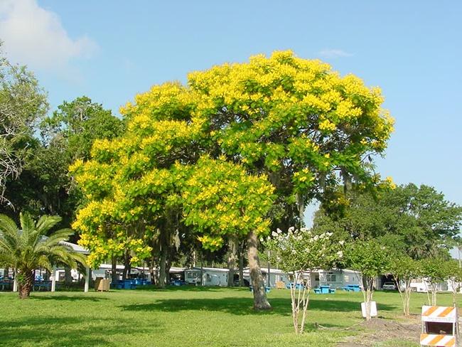 Cây được trồng cảnh ở những khu vực công cộng