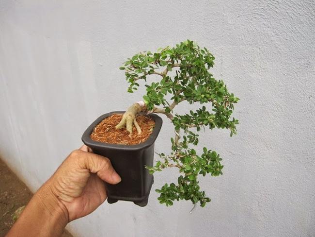 Nhân giống cây bằng phương pháp gieo hạt