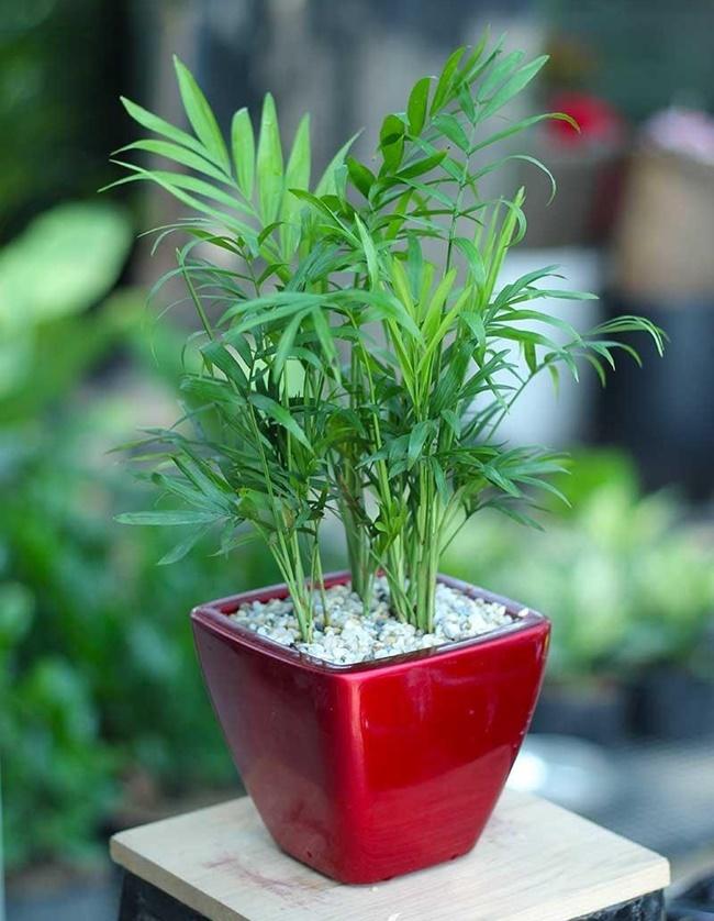 Đảm bảo đủ nước tưới và ánh sáng cho cây