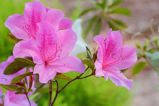 Mỗi màu hoa đều có ý nghĩa riêng