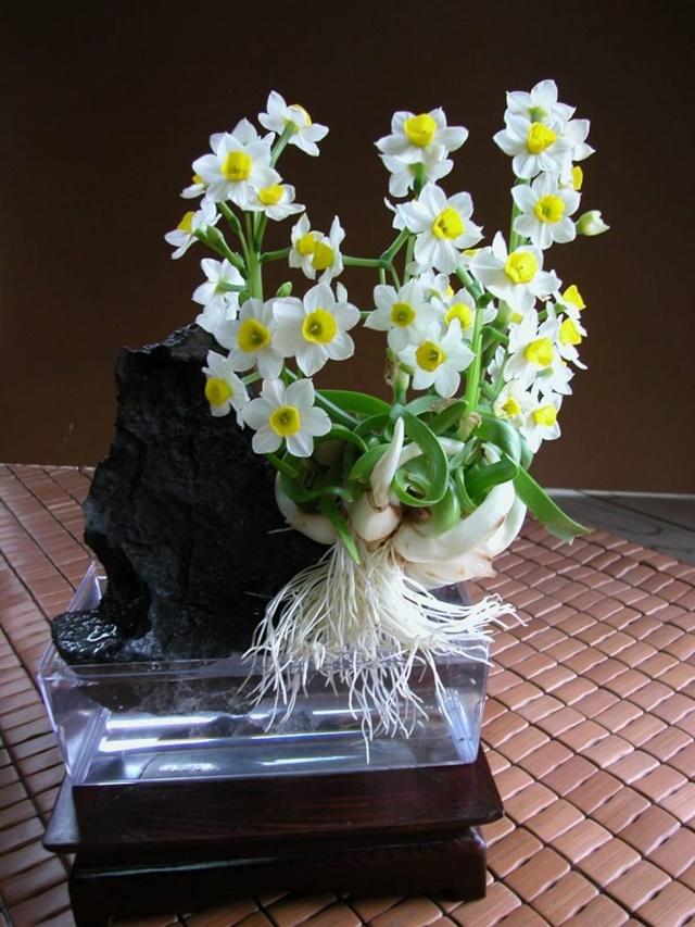 Cây hoa thủy tiên được tạo dáng trang trí