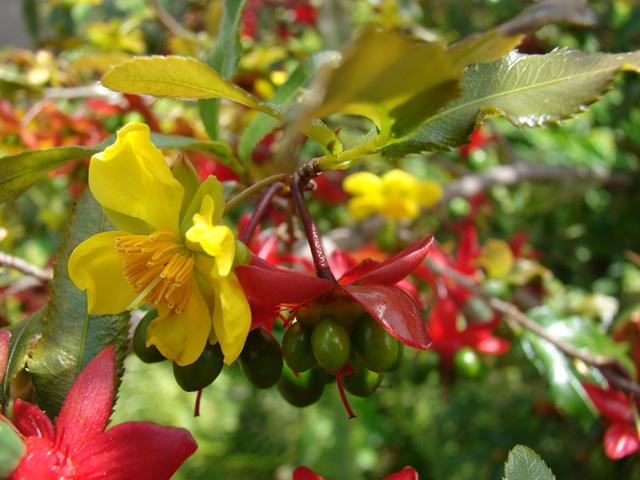Hoa của cây có 2 màu nổi bật