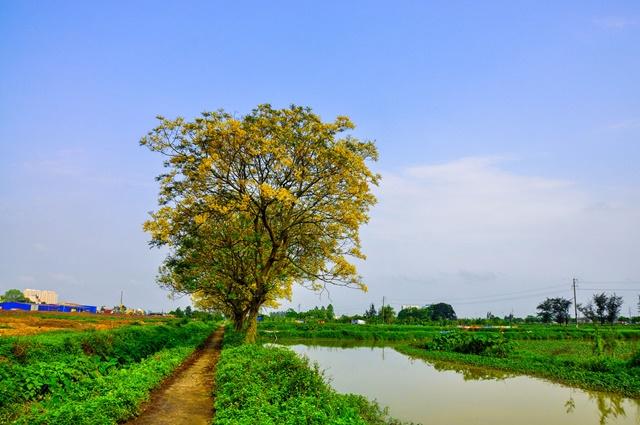 Khi cây đã lớn thì không cần chăm sóc nhiều