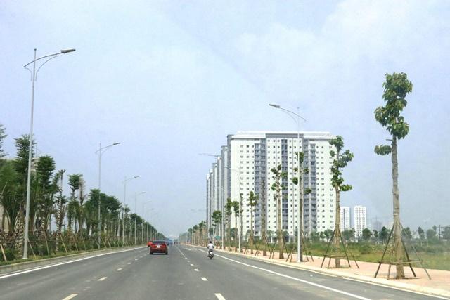 Hàng cây dầu rái được trồng mới dọc đường