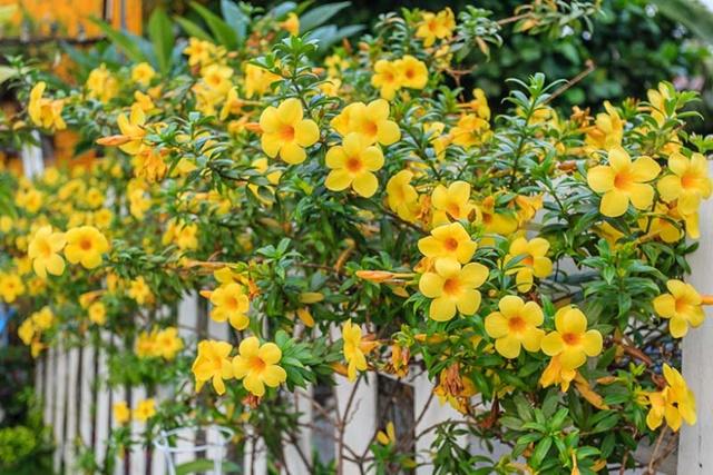 Càng nhiều ánh sáng, hoa nở càng rực rỡ