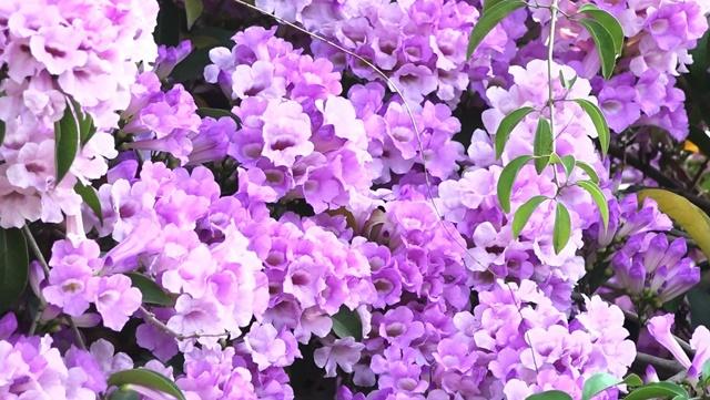Càng nhiều ánh sáng, hoa càng nở rực rỡ