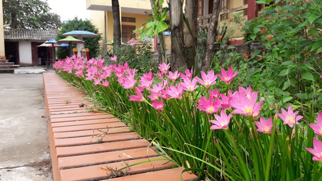 Cây hoa tóc tiên trang trí không gian công cộng