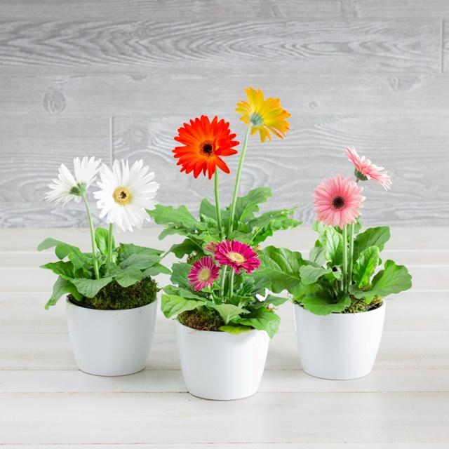 Nhớ tưới nước đều đặn cho hoa nhé