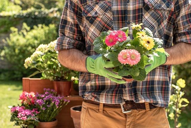 Dùng phương pháp tách bụi để nhân giống hoa