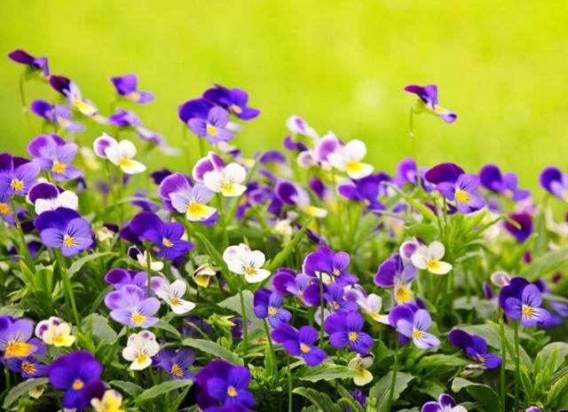 Trồng hoa ở nơi thoáng mát