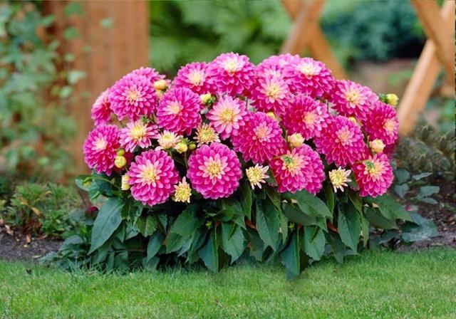 Màu hoa tươi sáng hơn khi tiếp xúc với nhiều ánh sáng