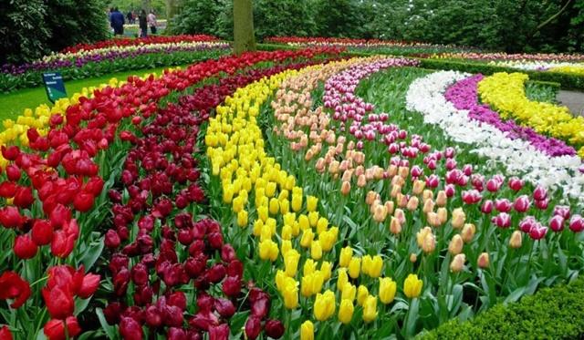Vườn hoa mang lại cảm giác thư thái, trong lành
