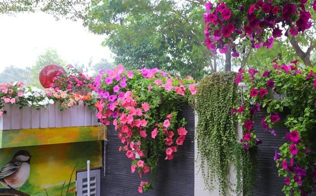 Dạ yến thảo là loài hoa mang nhiều ý nghĩa