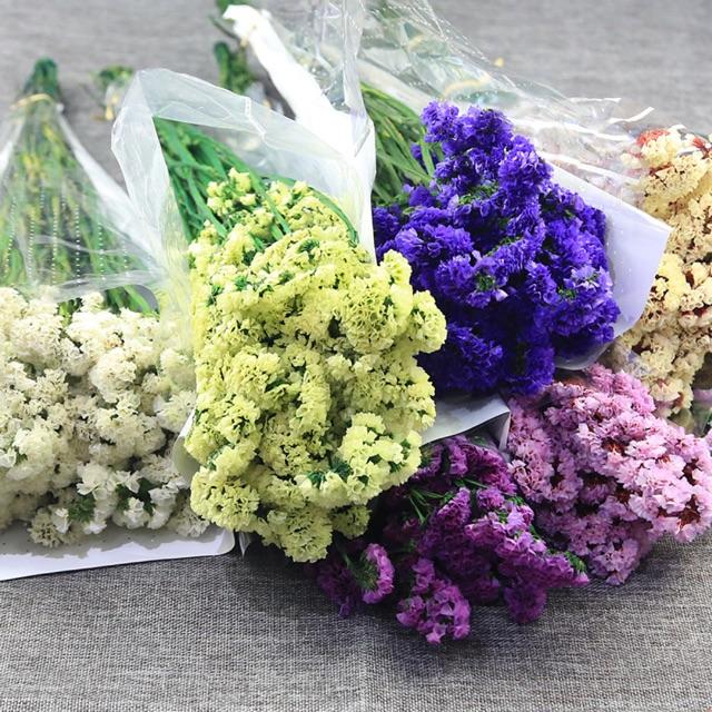 Màu sắc đa dạng của hoa salem