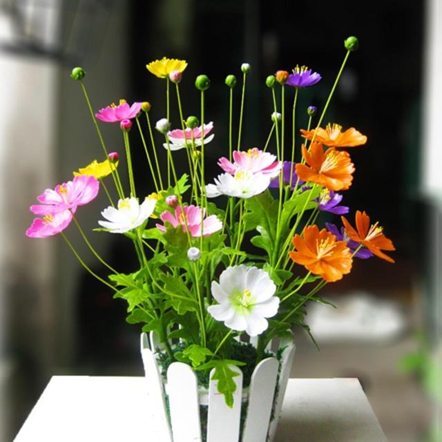 Chậu hoa sao nhái đầy màu sắc