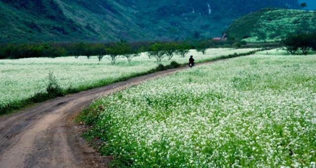 Hoa xuyến chi có thể nhân giống bằng hạt và giâm cành