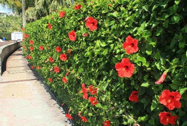 Trộng hoa ở nơi rộng rãi, nhiều ánh sáng