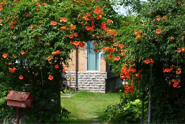 Một cổng vào được trang trí bằng hoa đăng tiêu