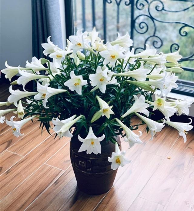 Một lọ hoa loa kèn khoe sắc