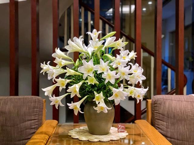 Mỗi tên gọi và màu sắc, hoa loa kèn lại mang một ý nghĩa khác nhau